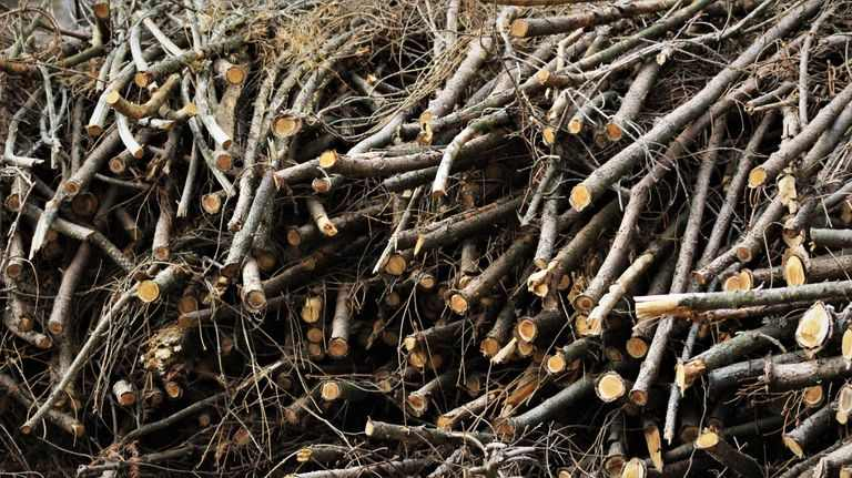 dry twigs and small sticks