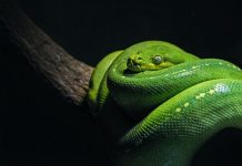 Will a Snake Cross a Braided Rope
