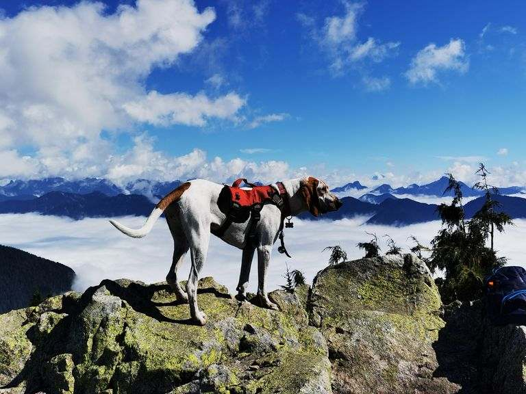 preparing your dog in hiking