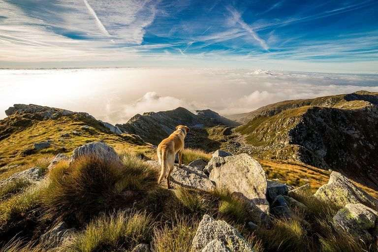 setting up your dog for outdoors